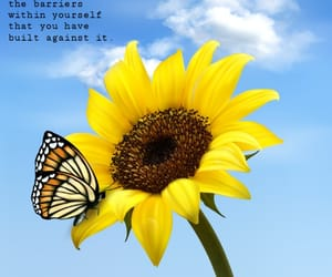 blue, blue sky, and butterfly image