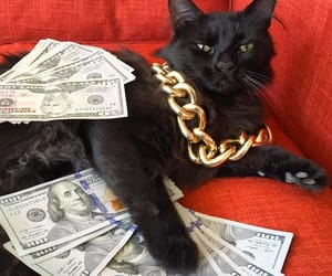 black, cat, and chain image