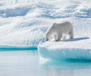 Animales, belleza, and invierno image