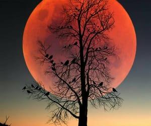 arbol, luna, and sangre image