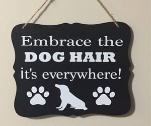 etsy, dog humor, and funny sign image