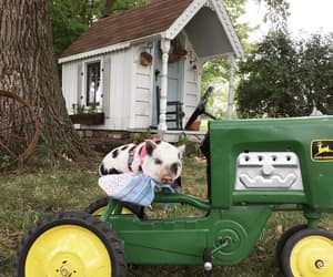 country living, pigs, and tractor image