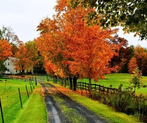 autumn, country living, and rural image