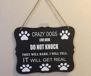 dog, dogs, and dog lovers image