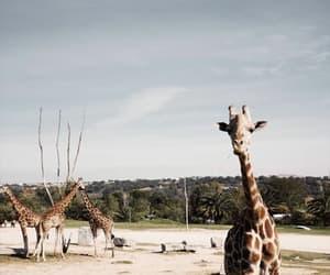 Animales, zoo, and animals image