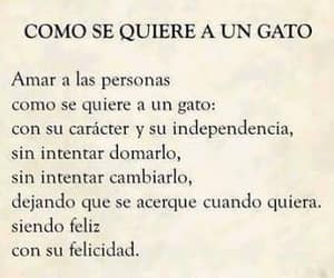 amor, frases, and Gatos image