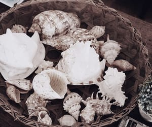 decor, details, and seashells image