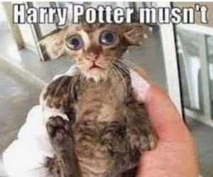 harry potter and memes image