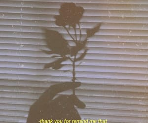 aesthetic, depression, and rose image