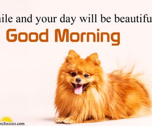good morning, morning, and cute morning pictures image