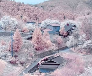 pink, japan, and nature image
