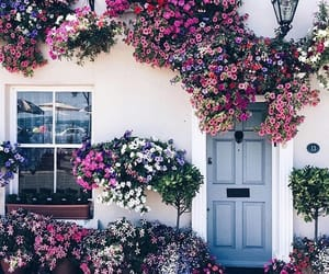 flowers, house, and summer image