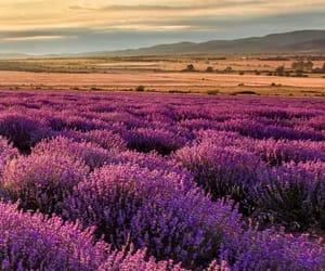 flowers, landscape, and lavender image