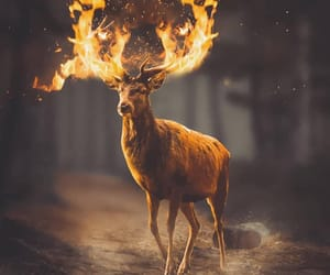 deer, fire, and forest image