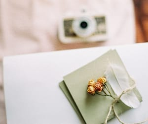 flower, home, and photography image
