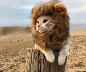 animals, cat, and lion image