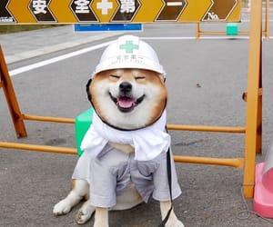 cute animals, dog, and shiba inu image