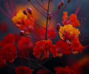 autumn colors, flowering plant, and nature's beauty image