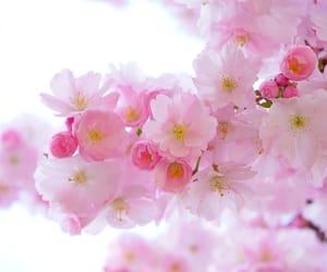 pink, rosas, and hermosura image