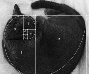 cat and math image