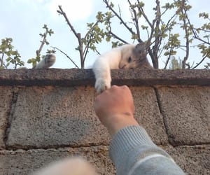 cat, holding hands, and kitten image