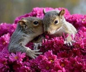 adorable, close up, and purple flowers image