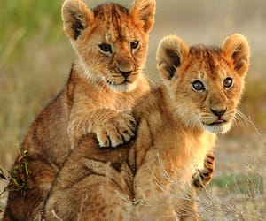 lions, animals, and puppies image