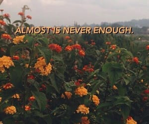 flowers, wallpaper, and aesthetic image