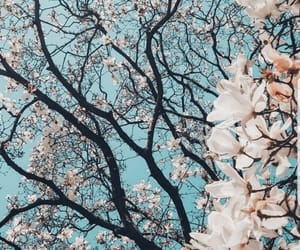 background, blossoms, and wallpaper image