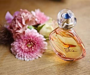rose perfume and rose cologne image
