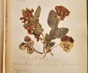 1800s, book, and dried flowers image