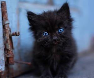 animals, kitty, and little kitty image