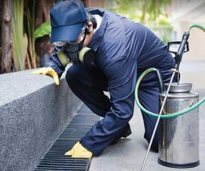 pest control warner, rodent removal warner, and bug removal warner image