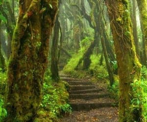costa rica and rain forest image