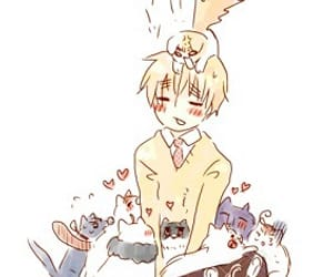 cats, hetalia, and Iggy image