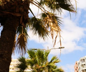 palm, photography, and gran canaria image