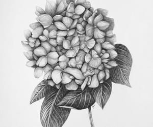 drawing, flower, and hydrangea image