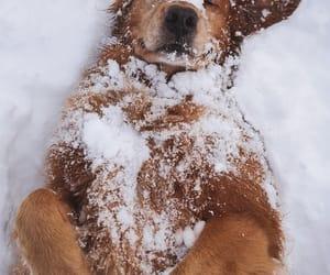 dog, animals, and snow image