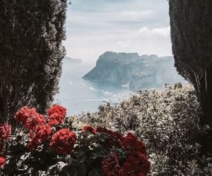flowers, travel, and nature image
