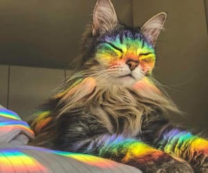 cat, life, and drog image