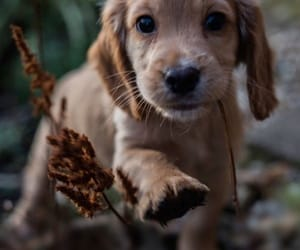 dog and chiot image