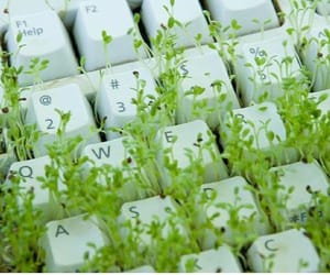 keyboard, green, and plants image