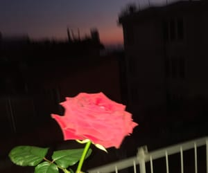 italy, rose, and ultimo image