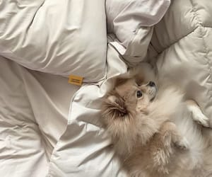 animal, bed, and happy image