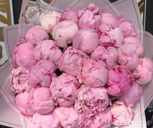 beautiful, bouquet, and peonies image