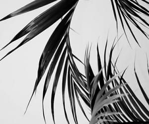 white, black, and palms image