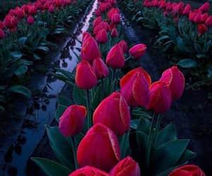 atardecer, tulipanes, and fiusa image