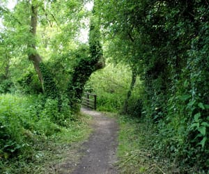 nature and green road image