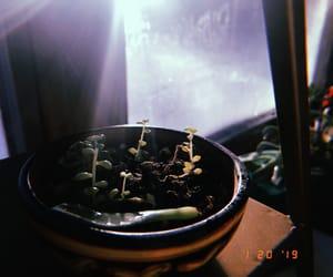 mood, hujicam, and plants image