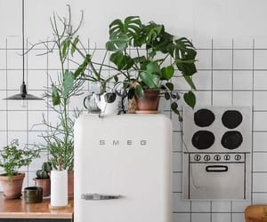 plants, kitchen, and decoration image